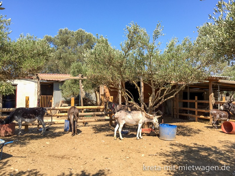 Agia Marina Donkey Rescue Resort